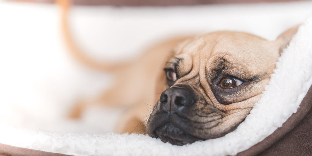 Gifts for puggle lovers
